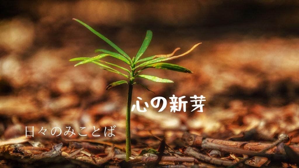 心の新芽の写真