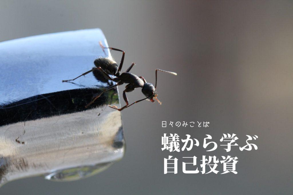 蟻から学ぶ自己投資の写真