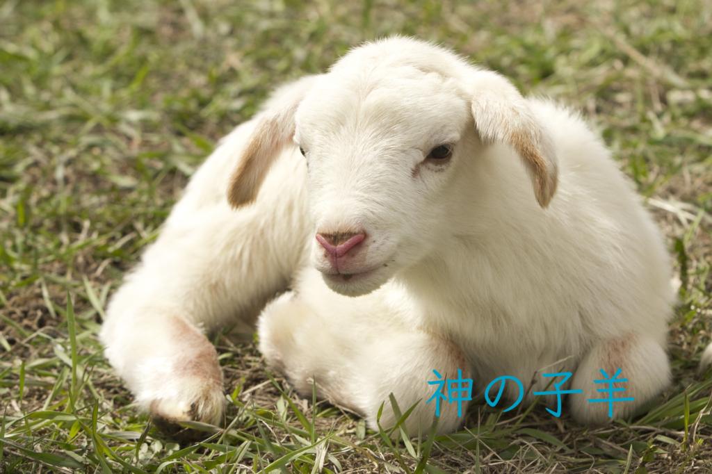 神の子羊の写真
