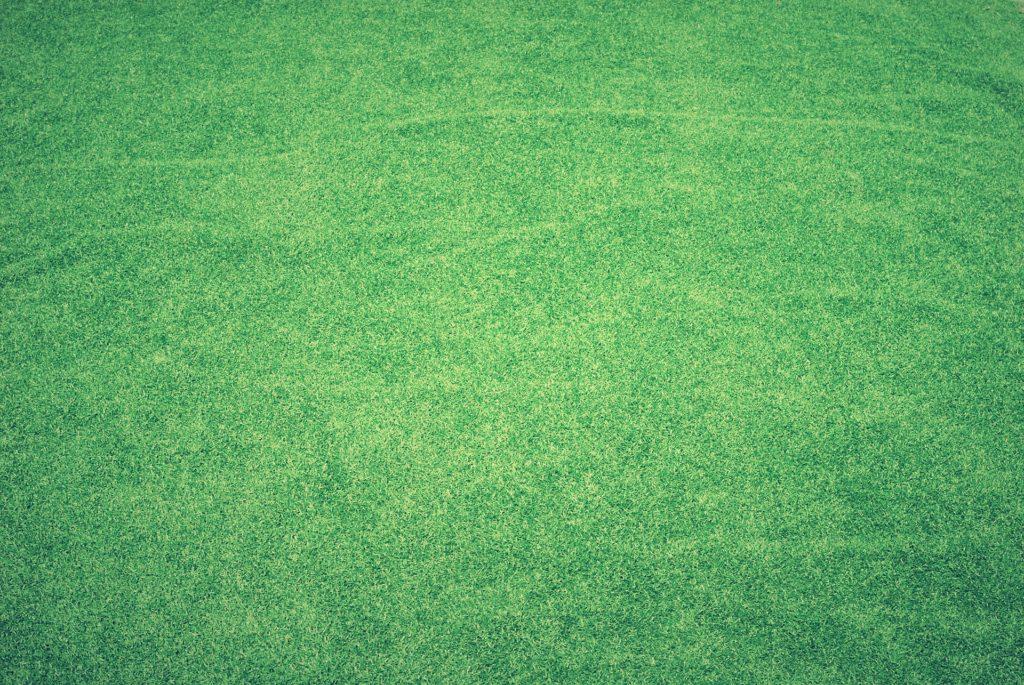 隣の芝生は青く見えるの写真